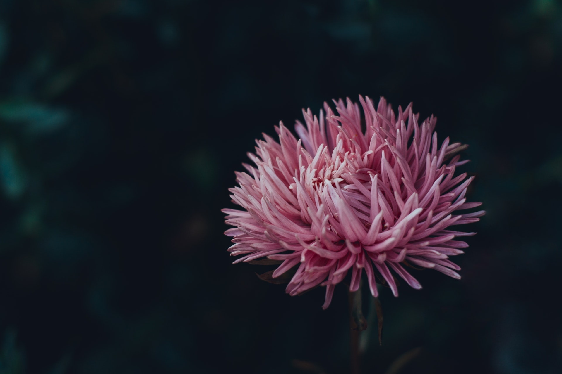 Tips for Fantastic Flower Photography